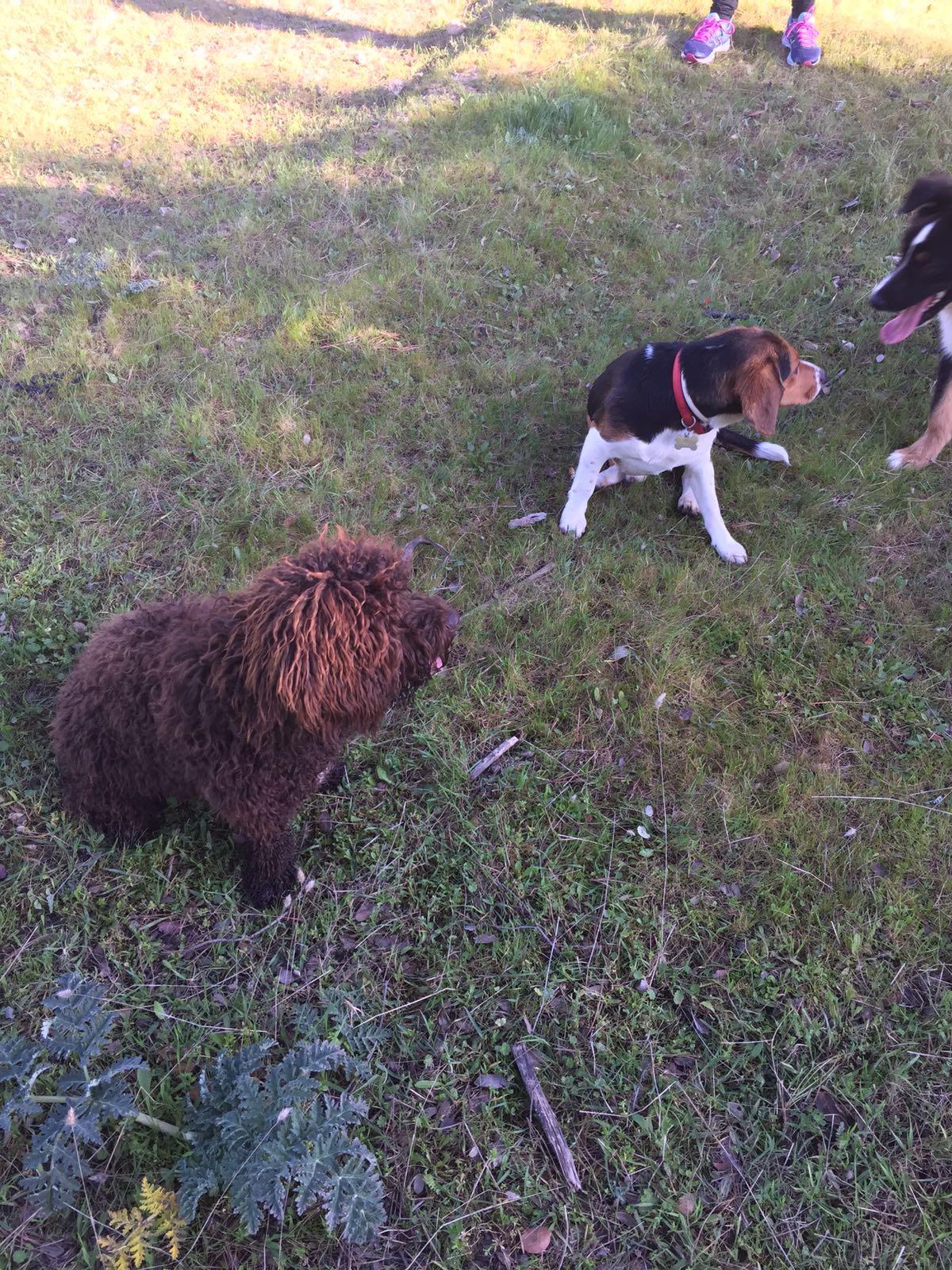 Max y lana 3