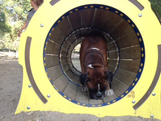 bunker-tunel-3