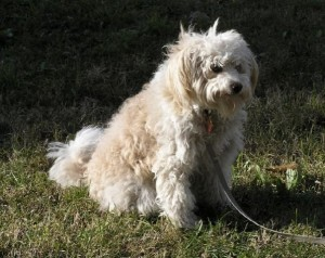 Laura- Adiestramiento perros