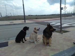 Ron con Maya y Huella