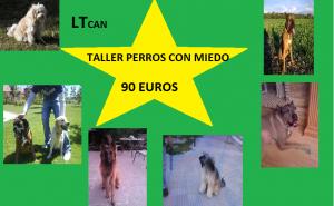 taller perros miedo4